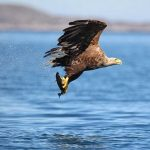 Birdwatching in East Clare